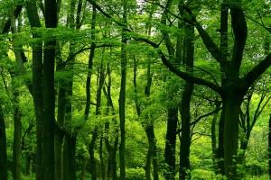 tree_woods_00020