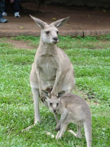 photo credit: Kanga and Roo via photopin (license)