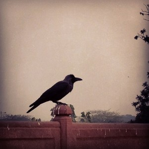 photo credit: Crow Perched at Red Fort in Delhi via photopin (license)