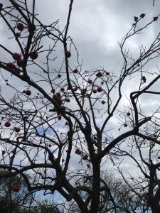 寒空に柿が残っている。