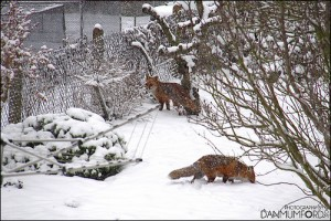 photo credit: Snow - January 2013 via photopin (license)