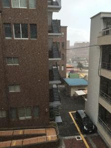 研究室の窓から、雪が舞い散るのが見える。